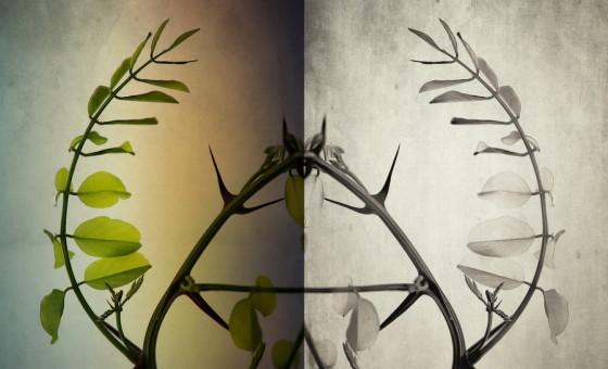 Montage © Michel Tonon